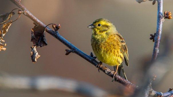 The Strand, Bird, Nature, Beak, Branch, Perched