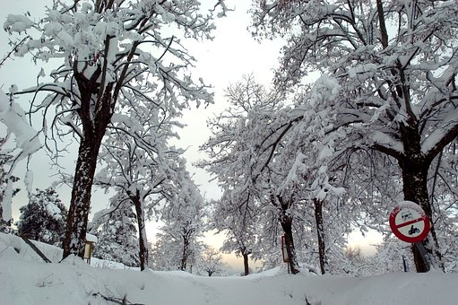 Snow, Trees, Signaling, Winter, Nature, Cold, Landscape