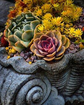 Flower, Botanical, Floral, Nature, Summer, Blossom