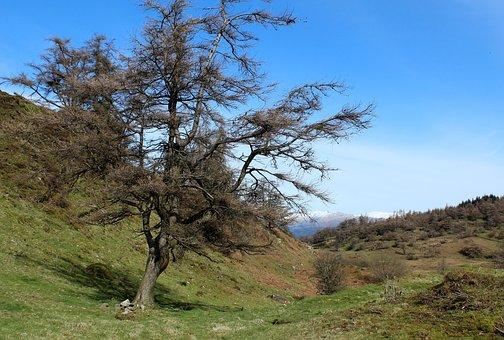Tree, Mountain, Snow, Spring, Landscape, Nature, Sky
