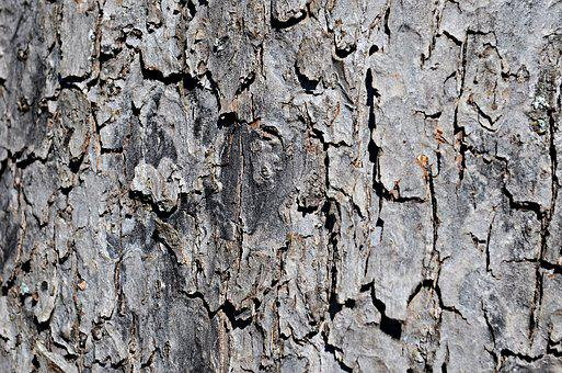 Tree, The Bark, Trunk, Texture, Nature, Forest