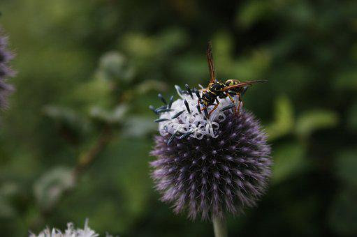 Wasp, Insect, Summer, Field Wasp, Animal, Blossom