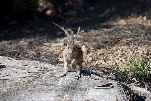 Chipmunk, Nature, Animals
