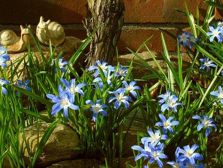 Star Hyacinth, Hyacinth, Blue, Spring Flower, Spring