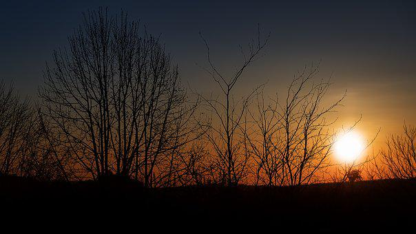 Sunset, Silhouette, Trees, Evening, Mood, Evening Sun