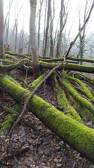 Moss, Trees, Forest, Nature