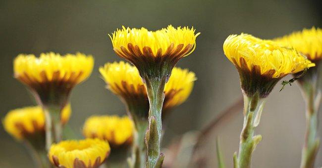 Wild Flowers, Yellow, Yellow Wild Flowers, Nature