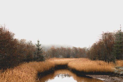 Bog, Forest, Ireland, Marsh, Reeds, Trees, Water