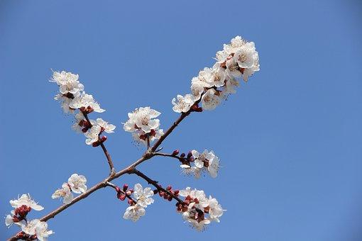 Pink Fades, Overturned Flower, Spring