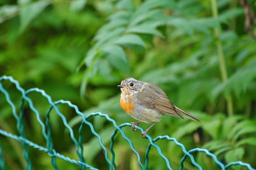 Bird, Fence, Animal, Summer, Nature