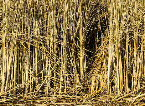 Texture, Background, Reed, Grass, Structure, Pattern