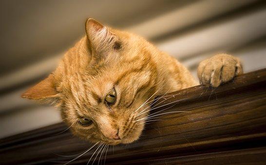 Cat, Feline, Animal, Animals, Felines, Pet, Cats, Puppy