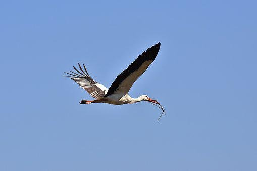 Stork, Nest Building, Aesthetic, Collect, Fly, Build