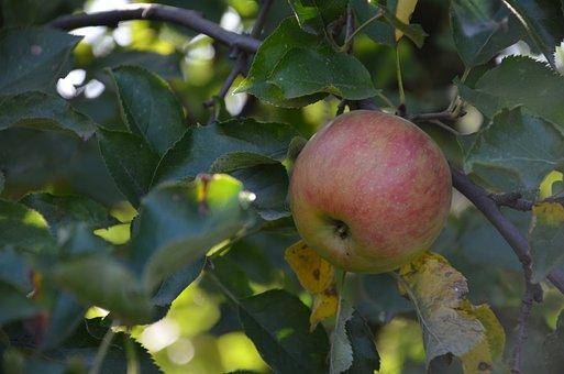 Apple, Green, Green Apple, Food, Healthy, Fruit, Fresh