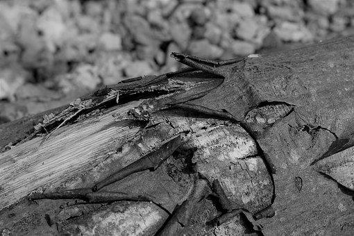 Bark, Log, Wood, Black And White, Monochrome, Detail