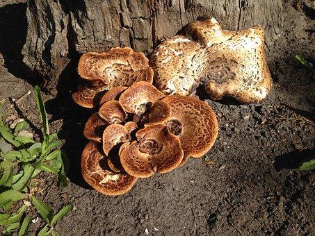 Mushroom, Nature, Autumn, Fungi, Mushrooms, Leaves
