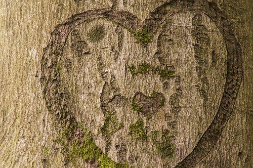 Bark, Tree, Heart, Brown, Nature, Tree Trunk, Tree Bark
