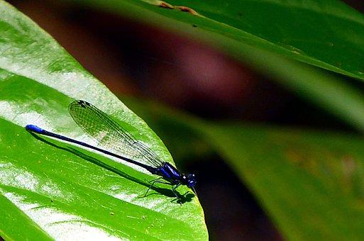Dragonfly, Insects, Odonata, Blue, Animal, Macro