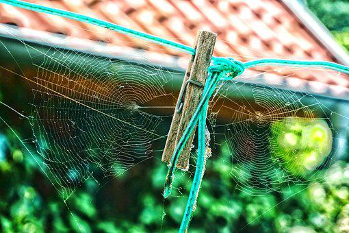 Spider Webs, Clothes Peg, Time, Autumn, Transience