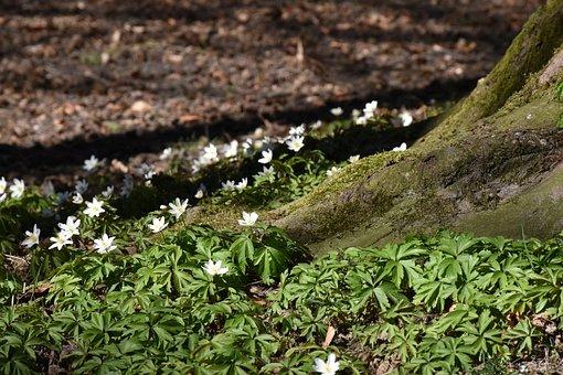 Log, Root, Spring, Spring Awakening, Nature, Tree