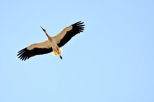 Stork, Fly, Build, Nature, Bill, Rattle Stork