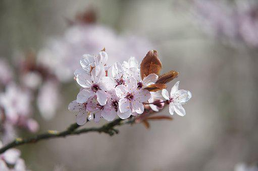 Spring, Blossom, Pink, Bloom, Nature