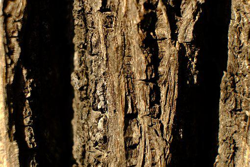 Tree, Bark, Log, Nature, Structure, Brown, Pattern