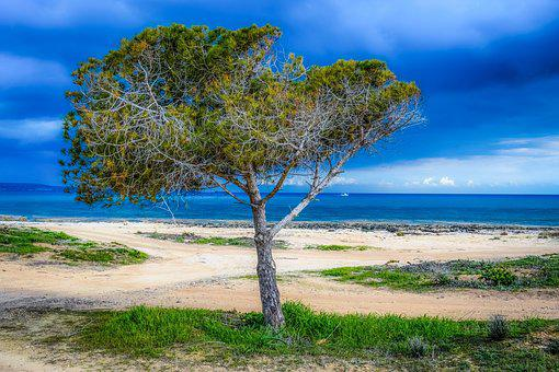 Tree, Beach, Sea, Sky, Clouds, Stormy, Nature, Horizon