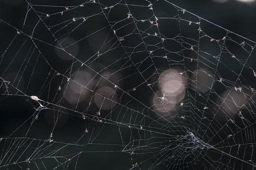 Web, August, Spin, Nature, Bug