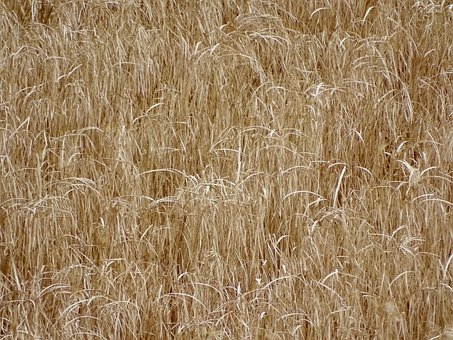 Field, Agriculture, Farm, Nature, Agricultural