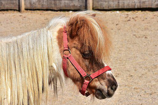 Horse, Pony, Cute, Animal, Seahorses, Nature