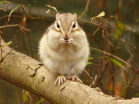 Animal, Squirrel, Diet