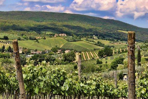 Tuscany, Vineyard, Landscape, Italy, Hill, Field, Farm