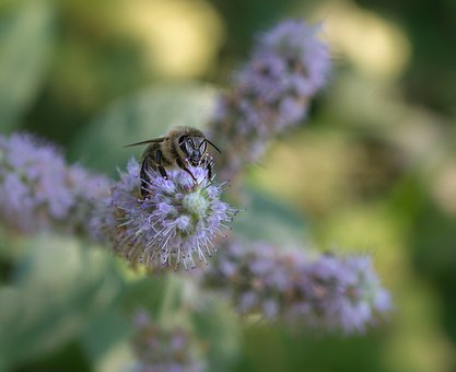 Bee, Forest, Nature, Wild Flower, Spring, Insect