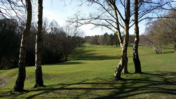Golf, Green, Grass, Golfing, Golfball, Putting, Flag