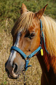 Horse, Spanish, Arabic, Crin, Stable, Horseback Riding