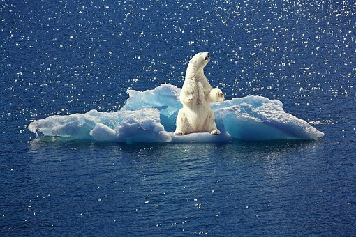 Polar Bear, Iceberg, Ice Floe, North Pole