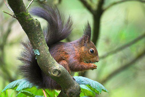 Squirrel, Park, Nature, Animal, Nager, Cute, Forest
