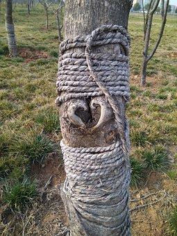 Tree, Heart, Plant