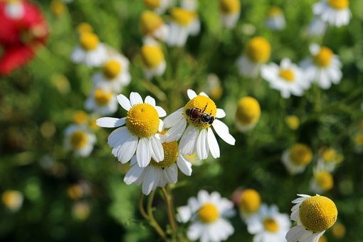 Small, Flowers, Flowering Grass, Nature, Refreshing