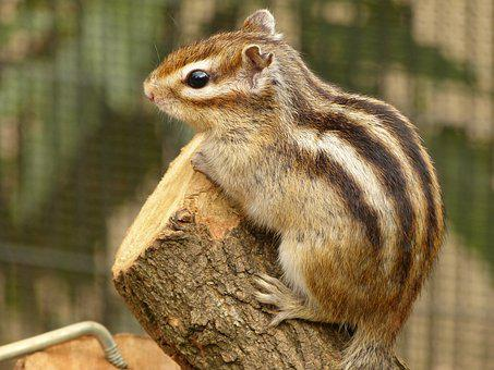 Animal, Squirrel, Patrol