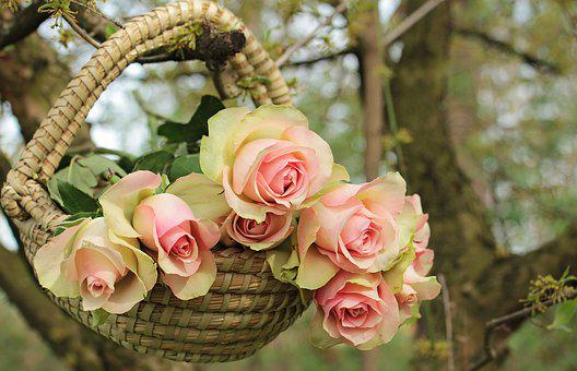 Roses, Noble Roses, Basket, Tree, Branch, Flowers, Pink
