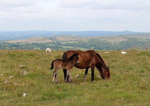 Pony, Horse, Animal, Outdoors, Wild, Country, Wild Pony