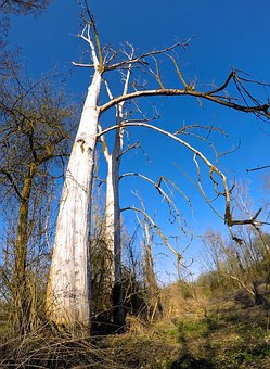 Tree, Old, Nature, Old Tree, Forest, Wood, Kahl, Dead