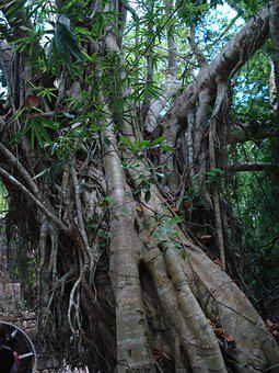 Tropical, Tree Trunk, Jungle, Nature, Trunk, Forest