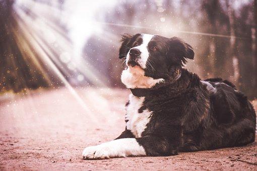 Dog, Light, Animal, Animal World, Good, Nature, Fur