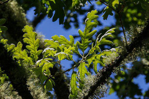 Nature, Leaves, Branch, Green, Green Leaves