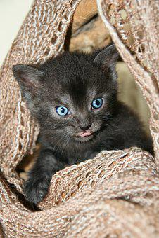 Cat, Kitten, Scarf, Knitted, Wool, Hand Labor, Helper