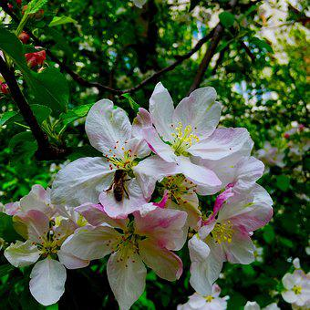 Flowers, Spring, Bee, Nature, Natural, Spring Flower