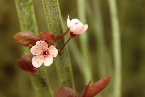 Flower, Blossom, Spring, Floral, Nature, Bloom, Plant